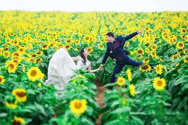 Cánh đồng hoa hướng dương huyện Nghĩa Đàn, tỉnh Nghệ An