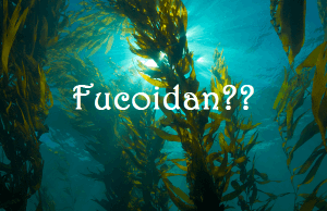 12 tác dụng của Fucoidan đối với sức khỏe được khoa học chứng minh