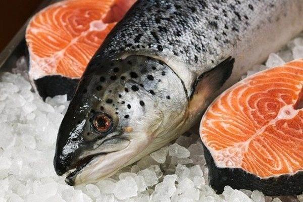 Omega 3 trong cá hồi rất tốt cho phổi