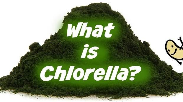 Chlorella là gì?