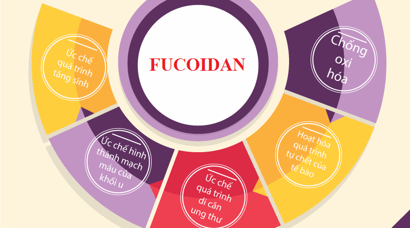Fucoidan của Mỹ hay Fucoidan của Nhật loại nào tốt hơn