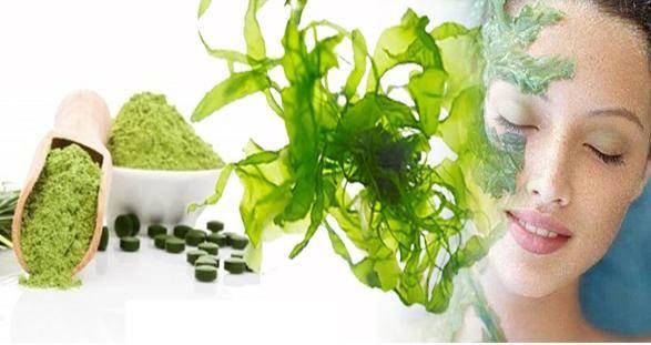 Tác dụng của tảo spirulina với da