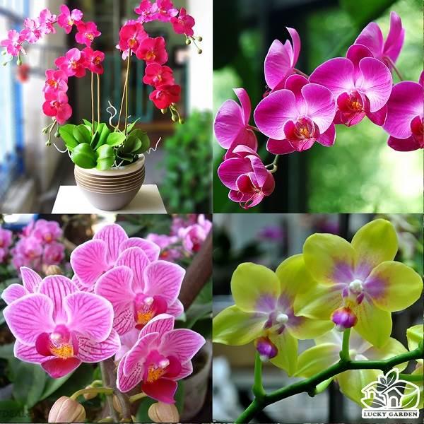 Top 9 loài hoa lan đẹp nhất và cực sang chảnh để chơi Tết 2020