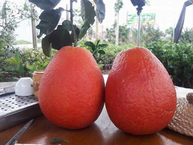 Top 15 loại quả độc đáo được ưa chuộng nhất vào ngày Tết