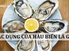 9 Tác dụng của hàu biển với sức khỏe